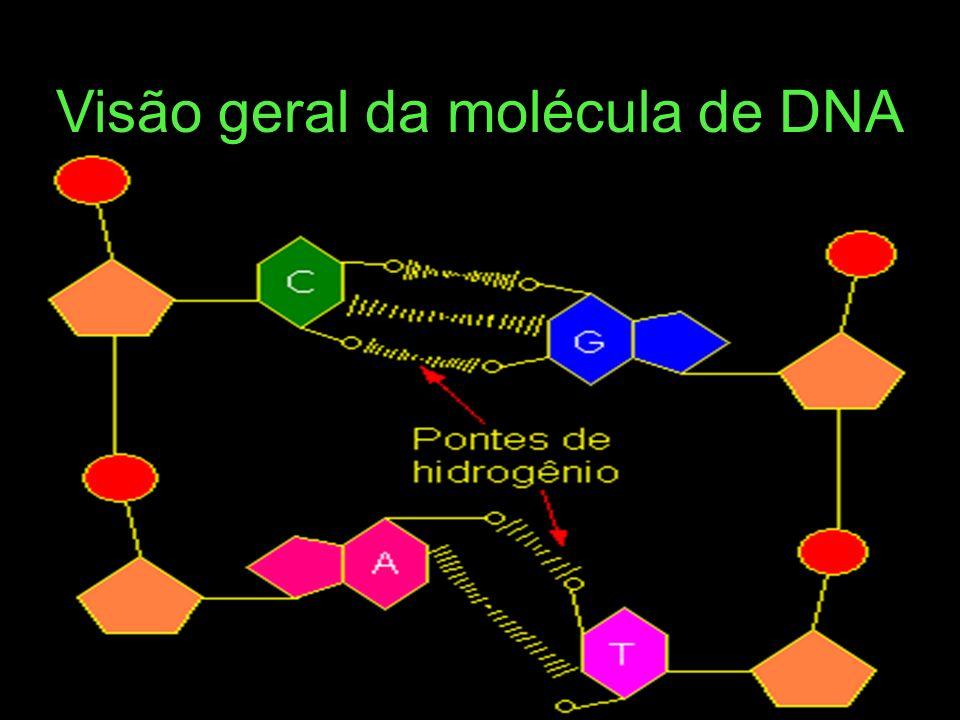 Visão geral da molécula de DNA