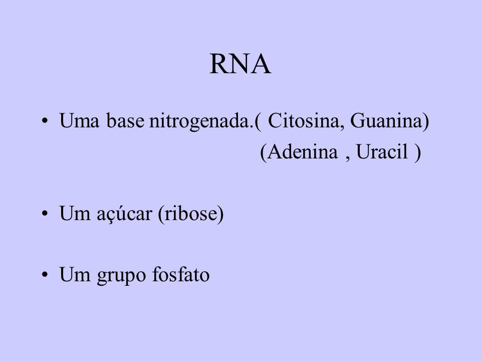 RNA Uma base nitrogenada.( Citosina, Guanina) (Adenina, Uracil ) Um açúcar (ribose) Um grupo fosfato