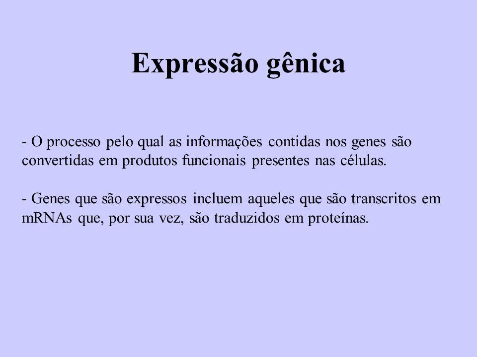 Expressão gênica - O processo pelo qual as informações contidas nos genes são convertidas em produtos funcionais presentes nas células. - Genes que sã