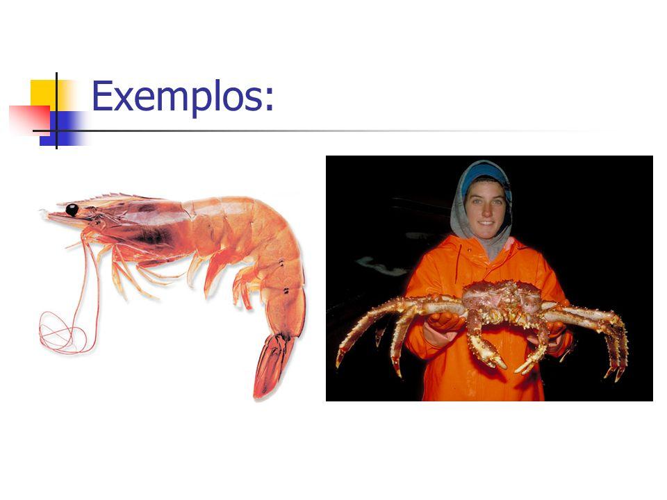 Classe Aracnídeos: Divisão:cefalotórax e abdômen.08 patas e nenhuma antena.