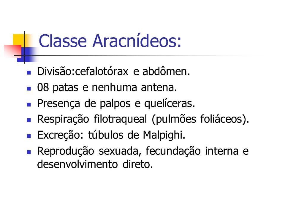 Classe Aracnídeos: Divisão:cefalotórax e abdômen. 08 patas e nenhuma antena. Presença de palpos e quelíceras. Respiração filotraqueal (pulmões foliáce