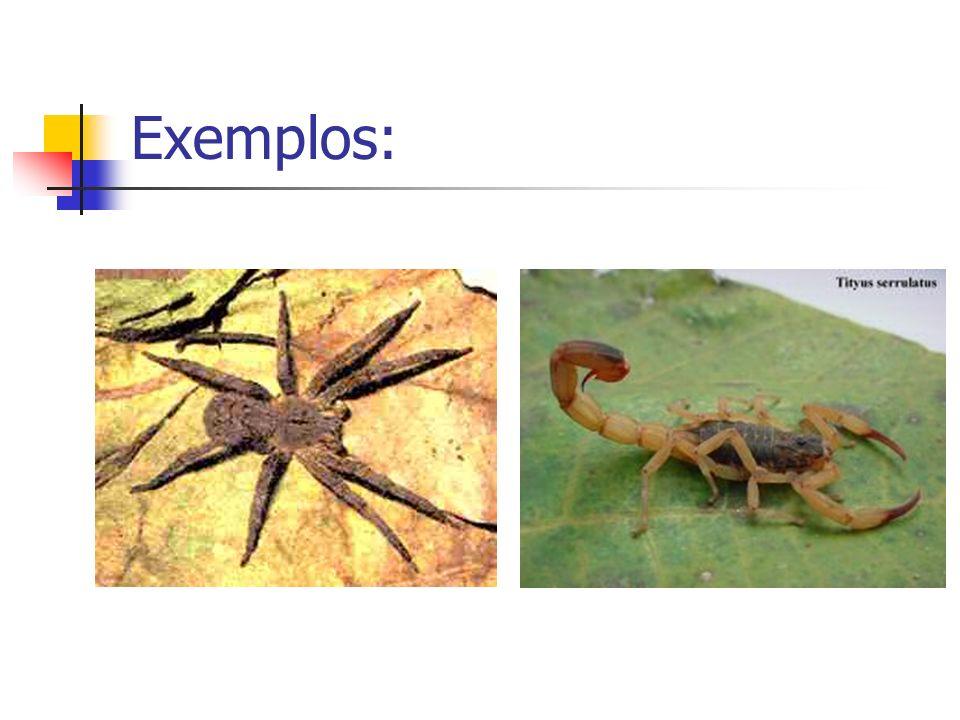 Acidente com aranhas: