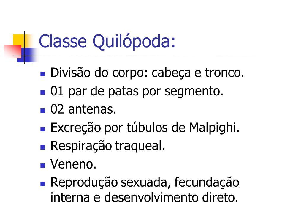 Classe Quilópoda: Divisão do corpo: cabeça e tronco. 01 par de patas por segmento. 02 antenas. Excreção por túbulos de Malpighi. Respiração traqueal.