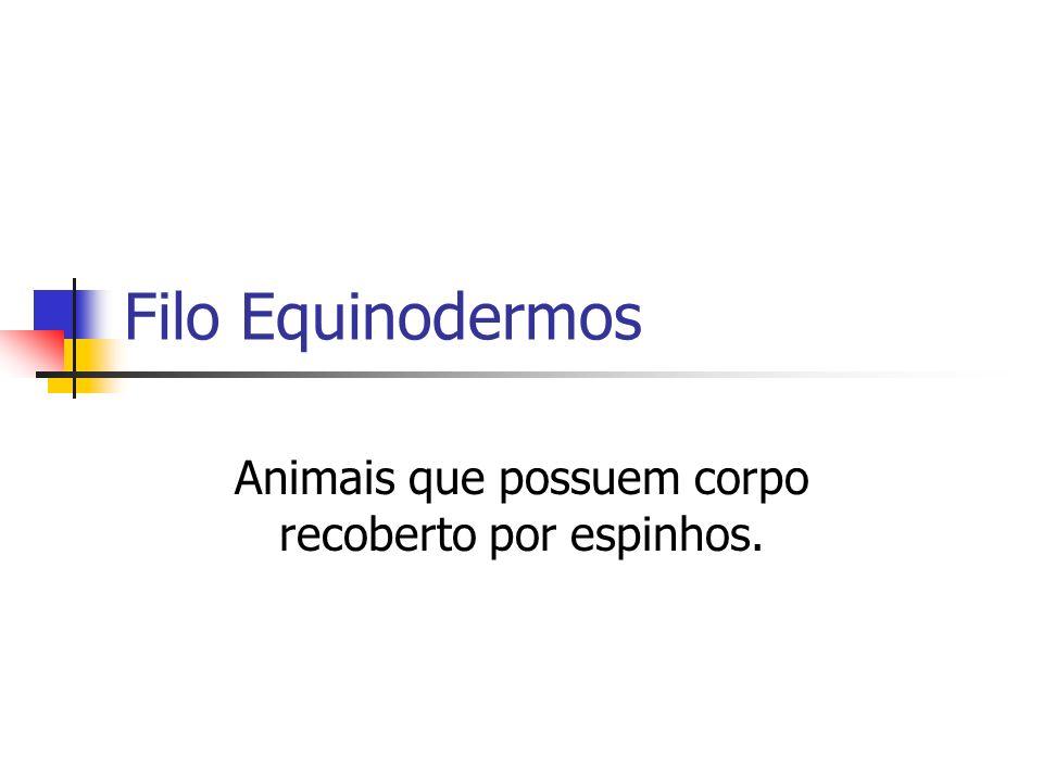Filo Equinodermos Animais que possuem corpo recoberto por espinhos.
