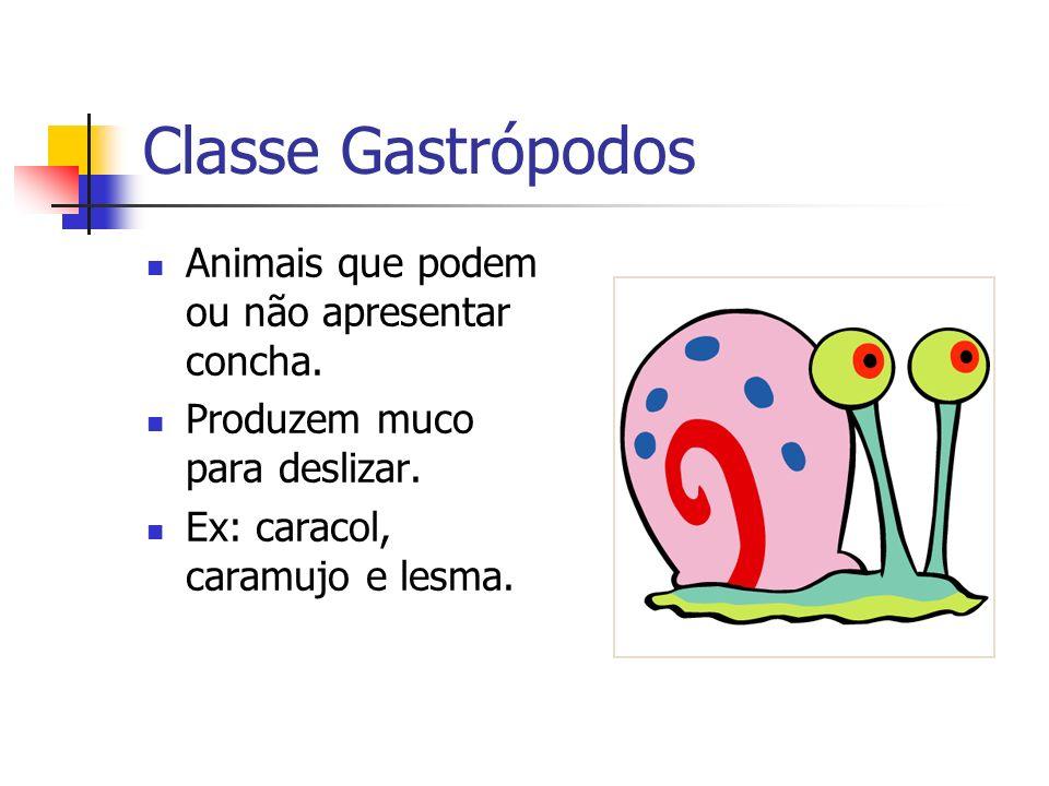 Classe Gastrópodos Animais que podem ou não apresentar concha. Produzem muco para deslizar. Ex: caracol, caramujo e lesma.