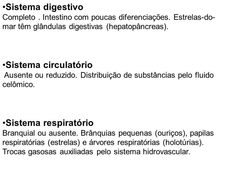 Sistema digestivo Completo. Intestino com poucas diferenciações. Estrelas-do- mar têm glândulas digestivas (hepatopâncreas). Sistema circulatório Ause