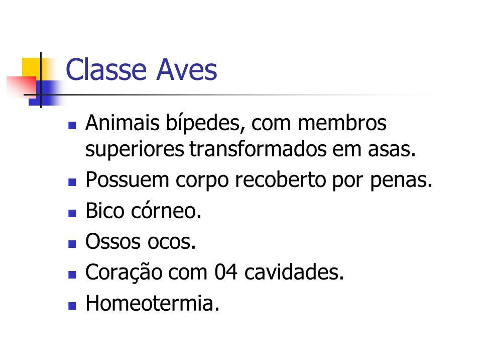 Classe Aves Animais bípedes, com membros superiores transformados em asas. Possuem corpo recoberto por penas. Bico córneo. Ossos ocos. Coração com 04