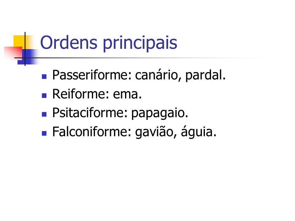 Ordens principais Passeriforme: canário, pardal. Reiforme: ema. Psitaciforme: papagaio. Falconiforme: gavião, águia.