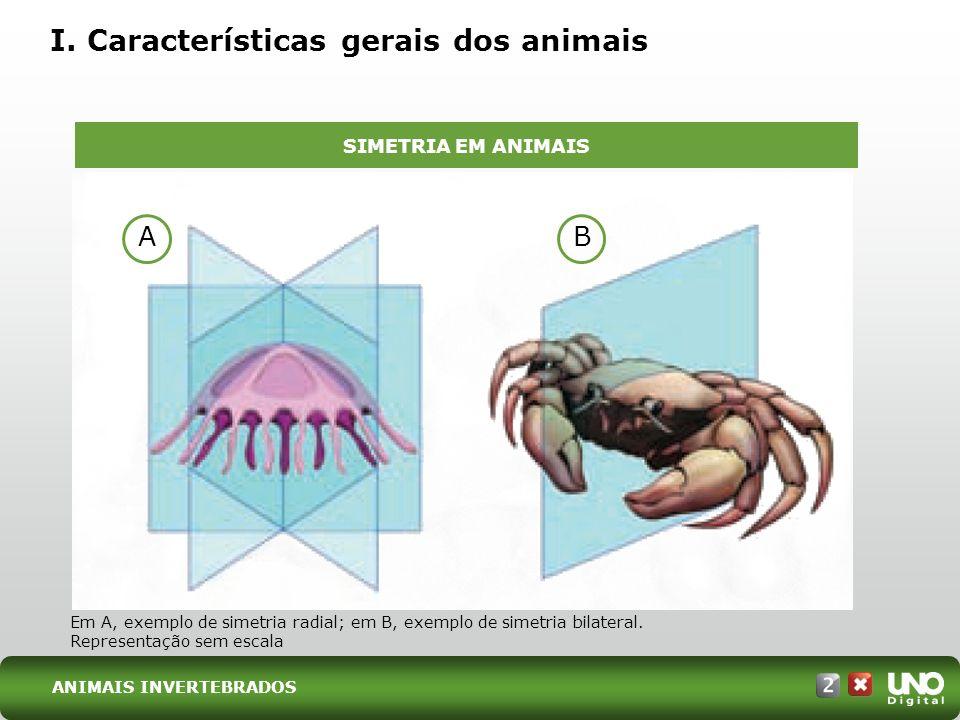 I. Características gerais dos animais Em A, exemplo de simetria radial; em B, exemplo de simetria bilateral. Representação sem escala SIMETRIA EM ANIM