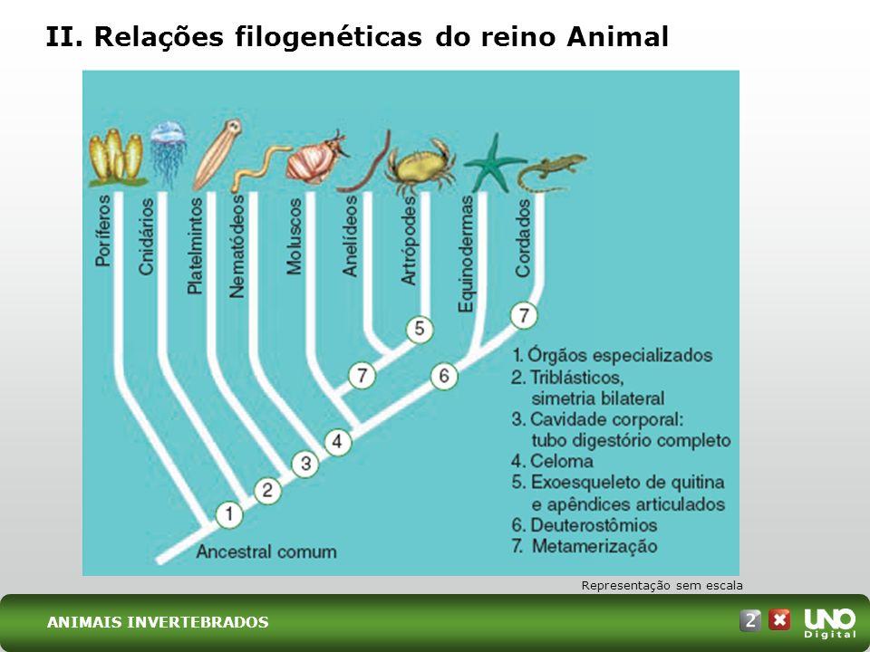 II. Relações filogenéticas do reino Animal Representação sem escala ANIMAIS INVERTEBRADOS