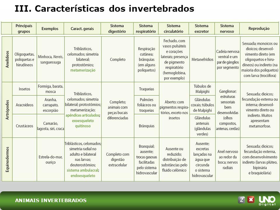 III. Características dos invertebrados ANIMAIS INVERTEBRADOS