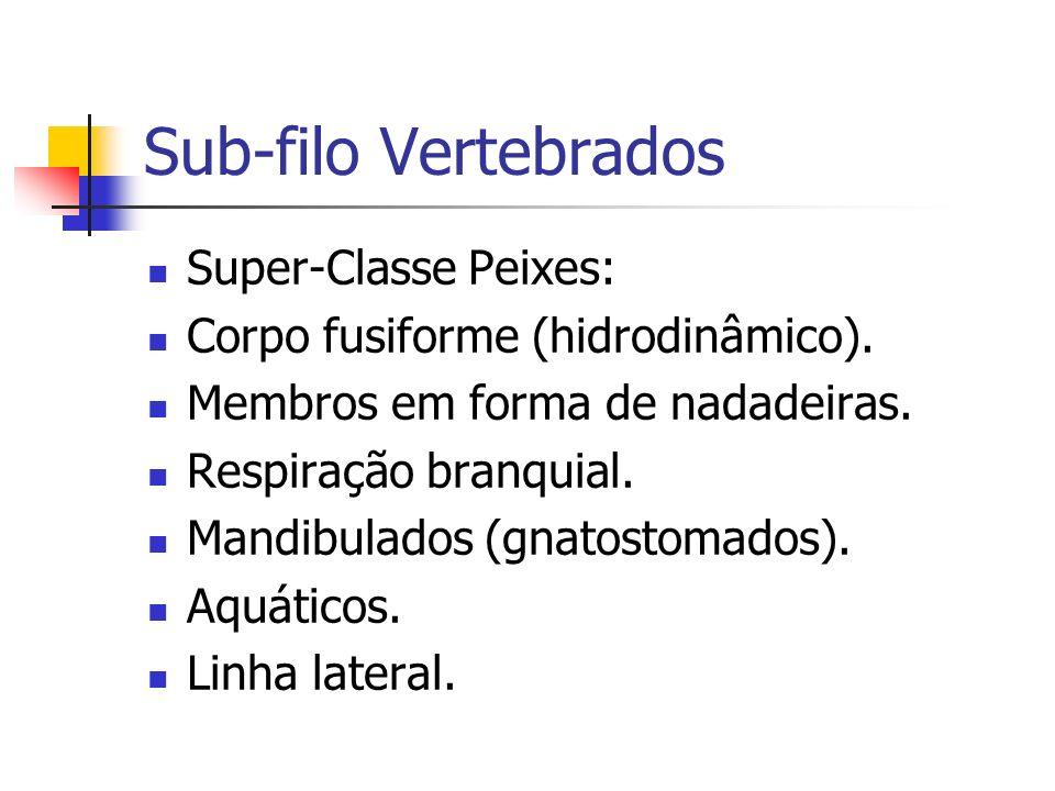 Sub-filo Vertebrados Super-Classe Peixes: Corpo fusiforme (hidrodinâmico). Membros em forma de nadadeiras. Respiração branquial. Mandibulados (gnatost