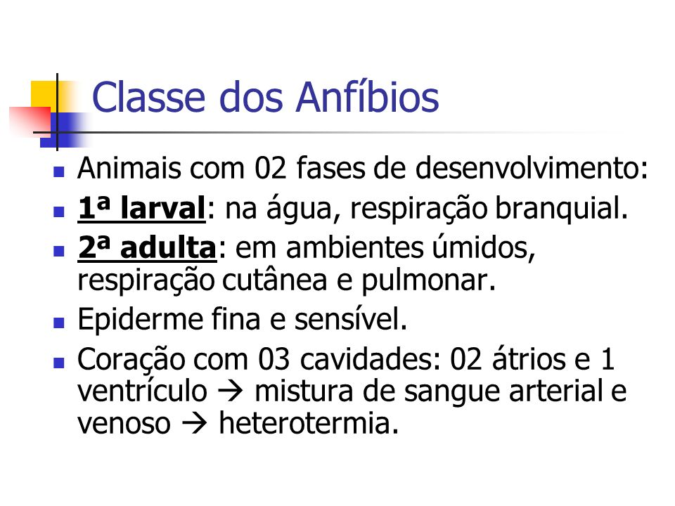 Classe dos Anfíbios Animais com 02 fases de desenvolvimento: 1ª larval: na água, respiração branquial. 2ª adulta: em ambientes úmidos, respiração cutâ