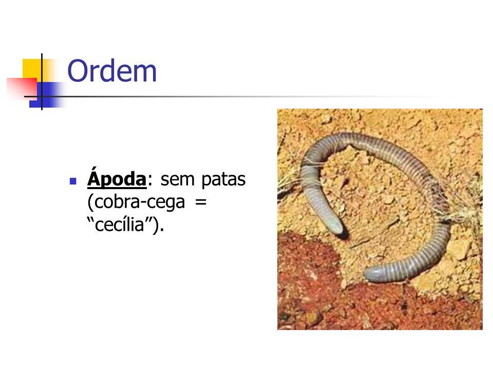 Ordem Urodela: com cauda (salamandras)