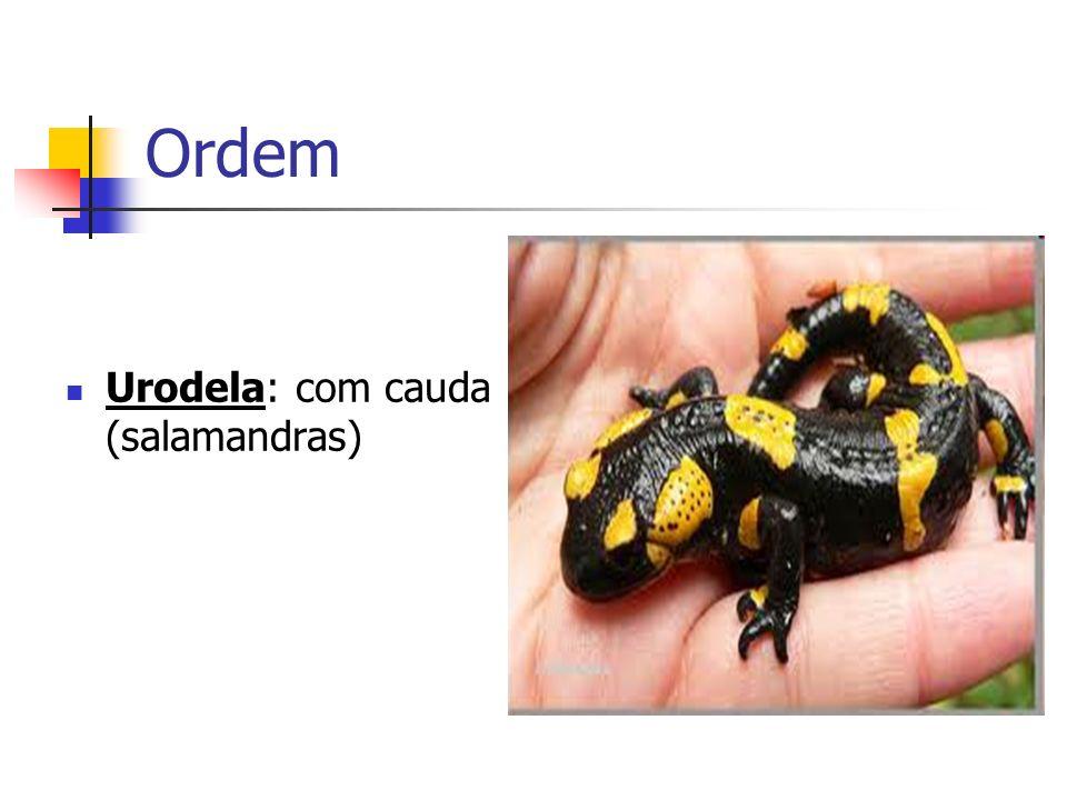 Reprodução Sexuada, com fecundação externa e desenvolvimento indireto (larva).