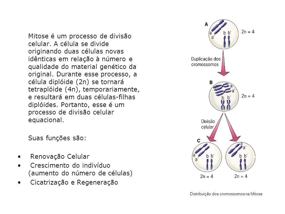 Mitose é um processo de divisão celular. A célula se divide originando duas células novas idênticas em relação à número e qualidade do material genéti