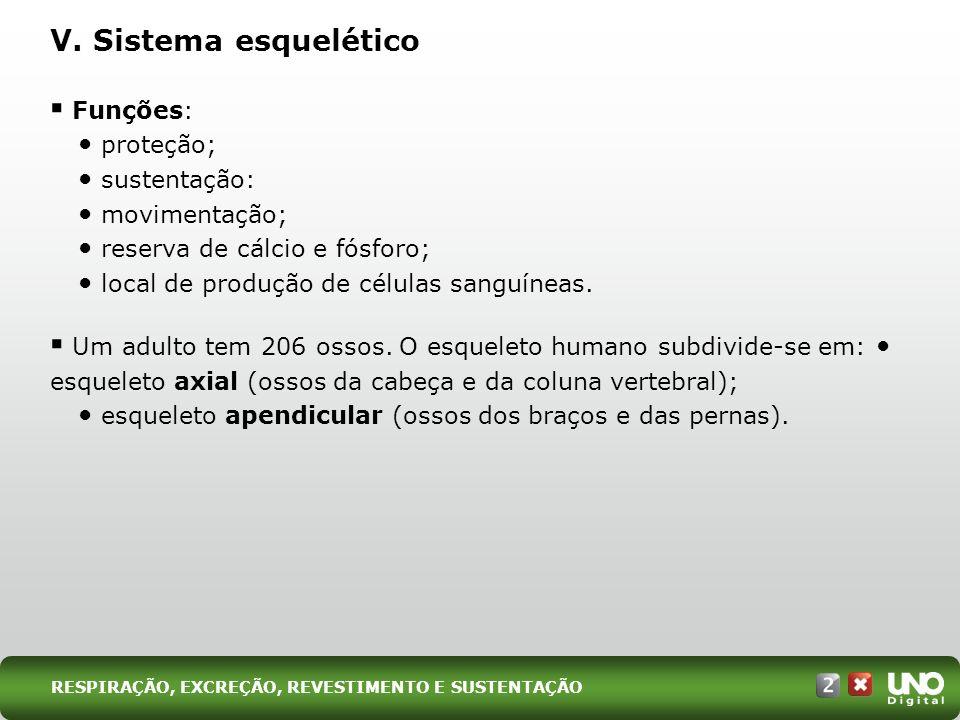 V. Sistema esquelético Funções: proteção; sustentação: movimentação; reserva de cálcio e fósforo; local de produção de células sanguíneas. Um adulto t