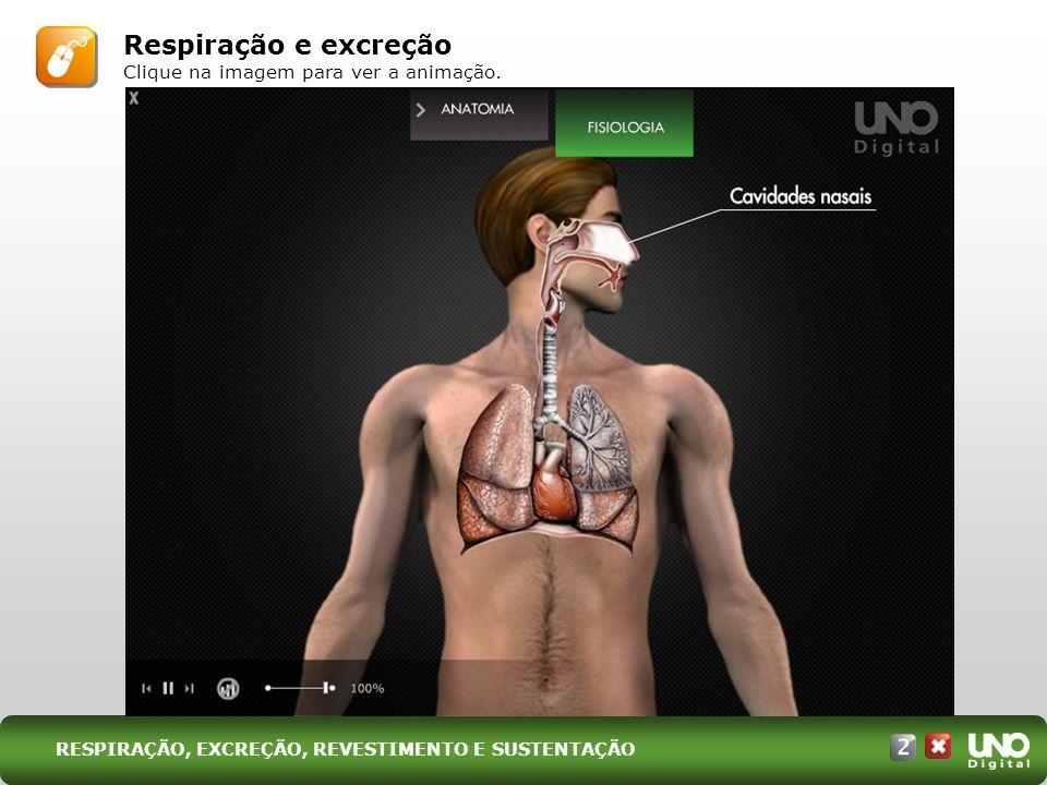 V.Sistema esquelético JURANDIR RIBEIRO Representação esquemática do esqueleto humano.