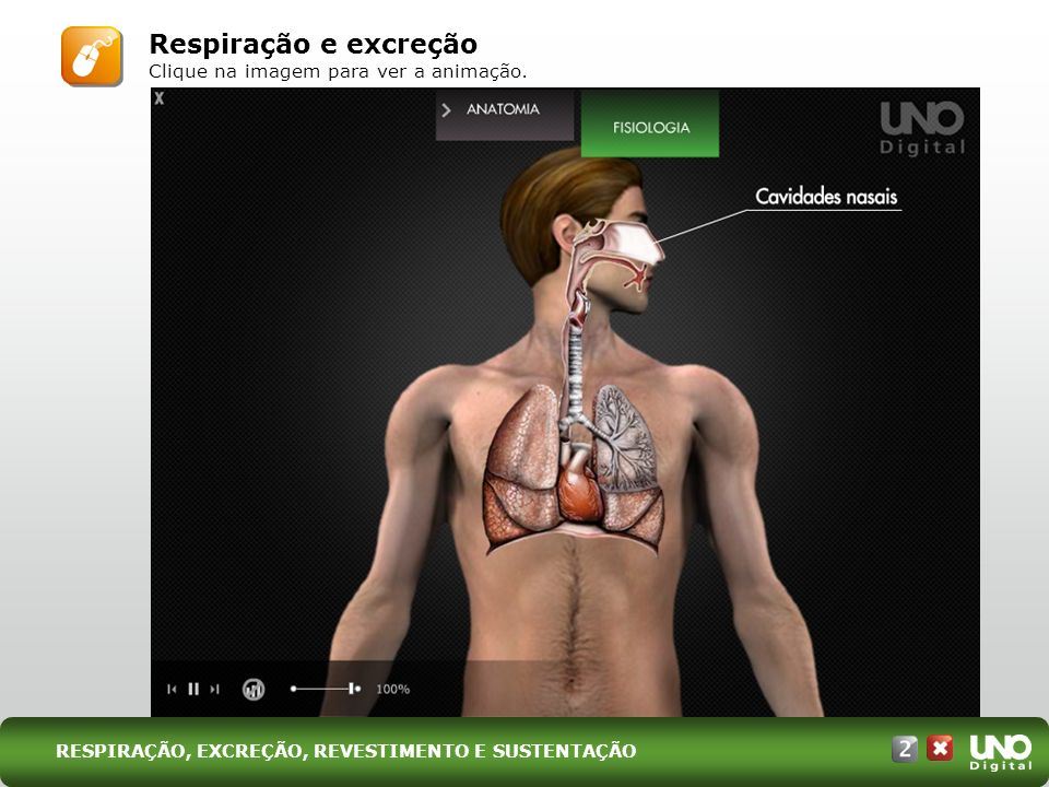 Respiração e excreção Clique na imagem para ver a animação. RESPIRAÇÃO, EXCREÇÃO, REVESTIMENTO E SUSTENTAÇÃO