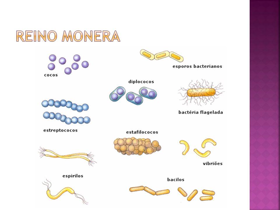 Diversidade nutricional das bactérias Eubactérias autotróficas Fotossíntese.