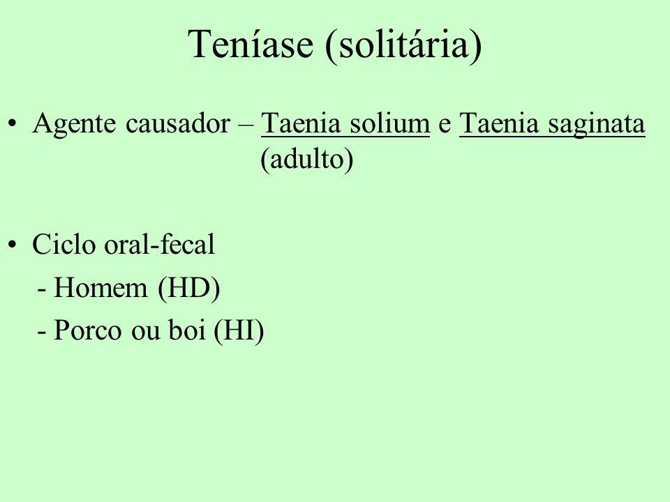 Teníase (solitária) Agente causador – Taenia solium e Taenia saginata (adulto) Ciclo oral-fecal - Homem (HD) - Porco ou boi (HI)