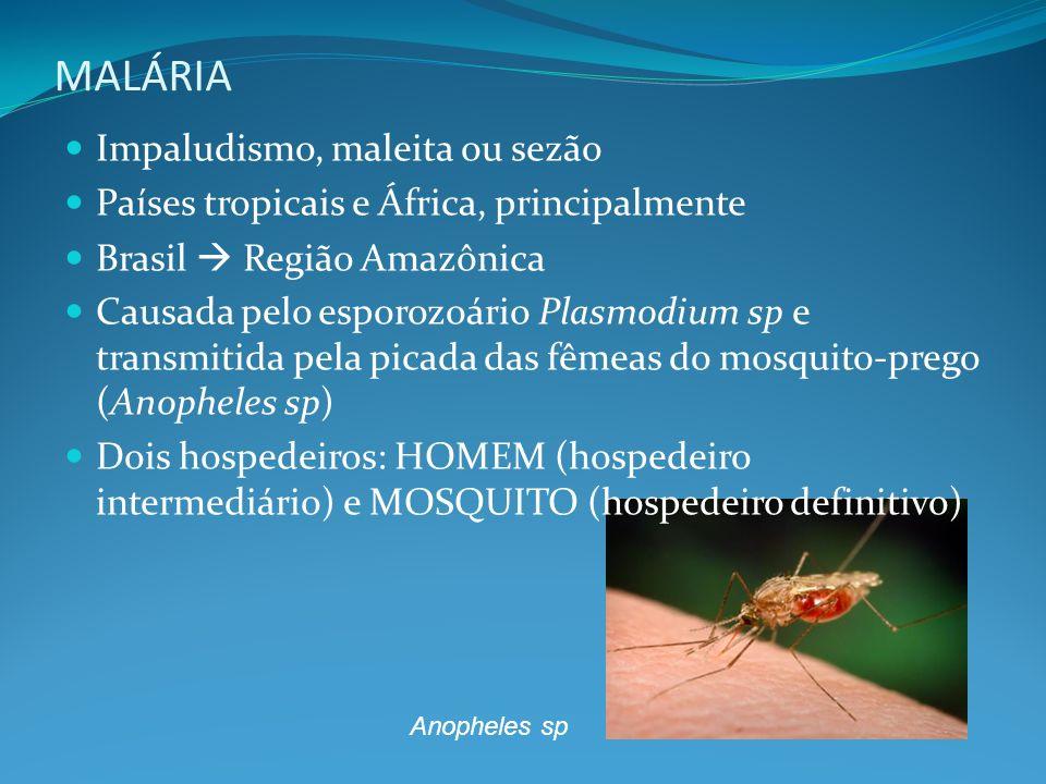 MALÁRIA Impaludismo, maleita ou sezão Países tropicais e África, principalmente Brasil Região Amazônica Causada pelo esporozoário Plasmodium sp e tran