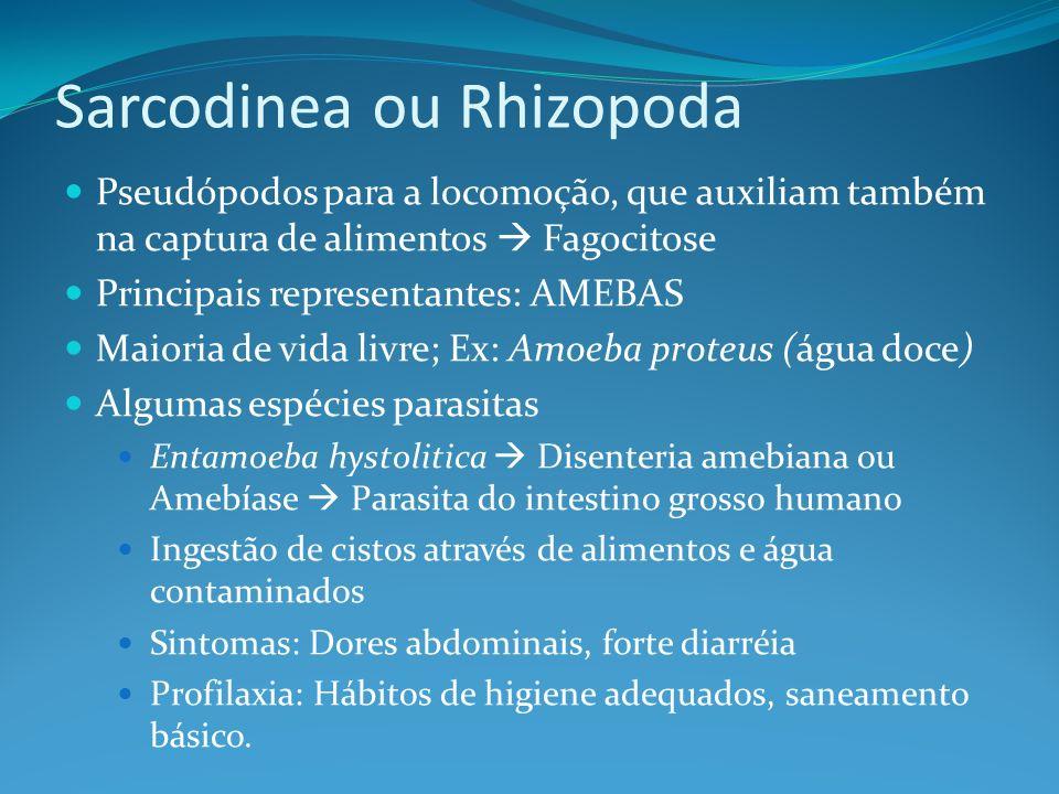 Sarcodinea ou Rhizopoda Pseudópodos para a locomoção, que auxiliam também na captura de alimentos Fagocitose Principais representantes: AMEBAS Maioria