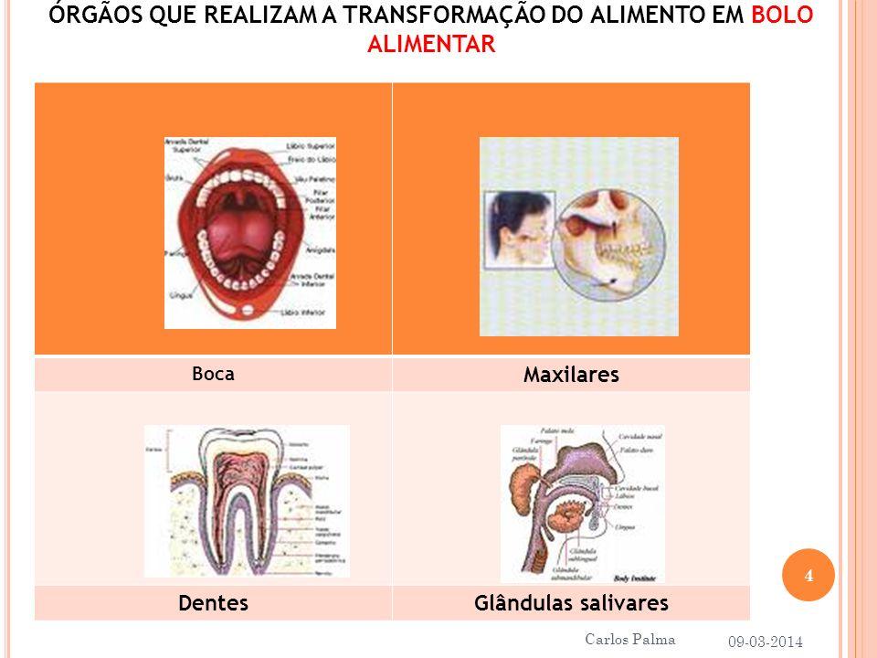ÓRGÃOS QUE REALIZAM A TRANSFORMAÇÃO DO ALIMENTO EM BOLO ALIMENTAR Boca Maxilares DentesGlândulas salivares 09-03-2014 4 Carlos Palma