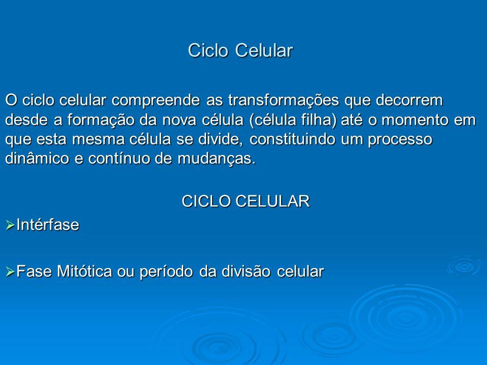 Ciclo Celular Ciclo Celular O ciclo celular compreende as transformações que decorrem desde a formação da nova célula (célula filha) até o momento em