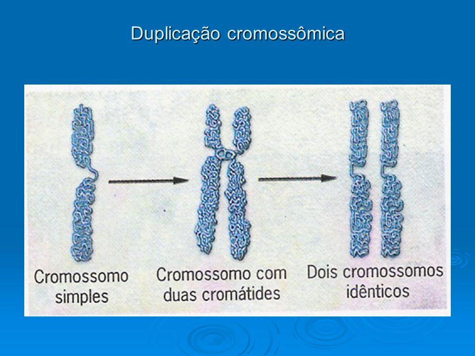 Duplicação cromossômica