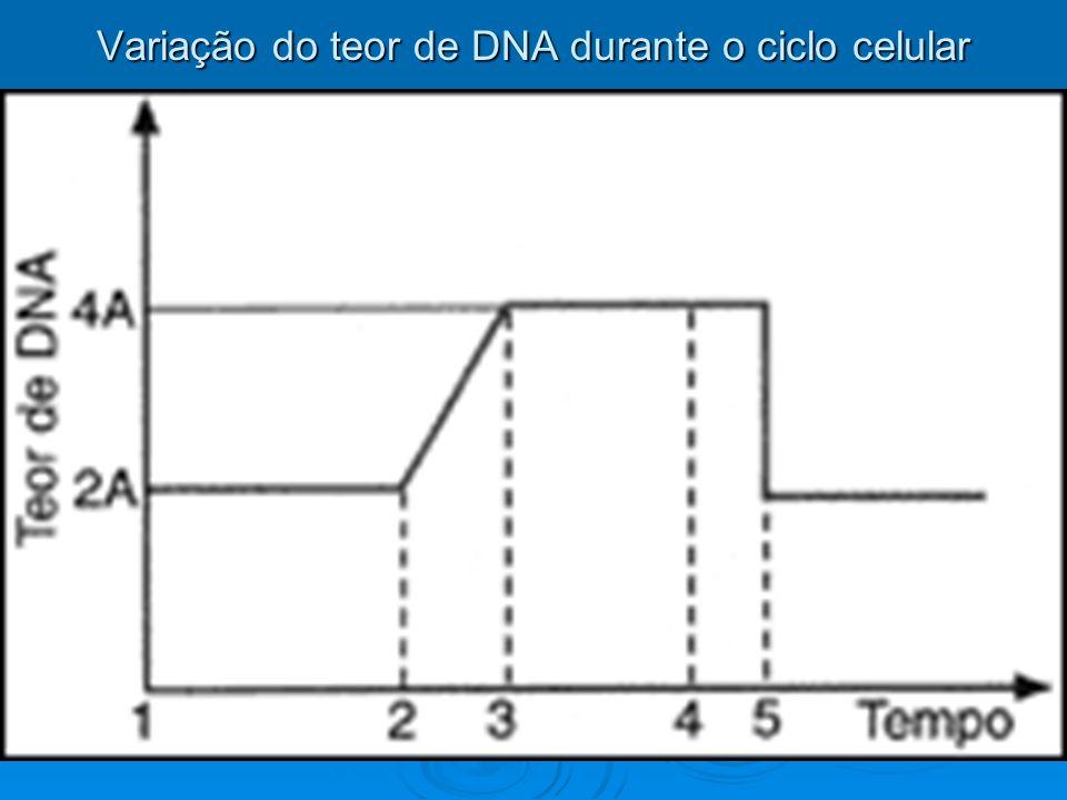 MITOSE A mitose diz respeito ao processo de divisão nuclear, originando duas células-filhas iguais a célula inicial quanto a qualidade e quantidade de material genético existente.
