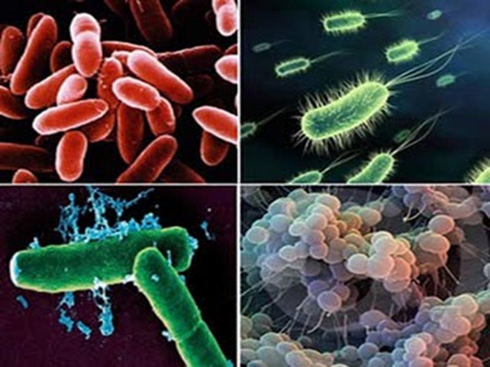 CLONAGEM Clone (grego:klon, broto, ramo) População de geneticamente idênticos, produzidos assexuadamente ou a partir de progenitor comum; Cópia idêntica de moléculas, células, tecidos e organismos adultos.