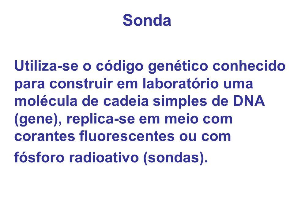 Sonda Utiliza-se o código genético conhecido para construir em laboratório uma molécula de cadeia simples de DNA (gene), replica-se em meio com corant