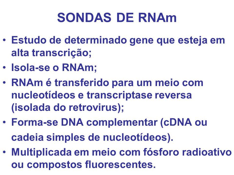 SONDAS DE RNAm Estudo de determinado gene que esteja em alta transcrição; Isola-se o RNAm; RNAm é transferido para um meio com nucleotídeos e transcri