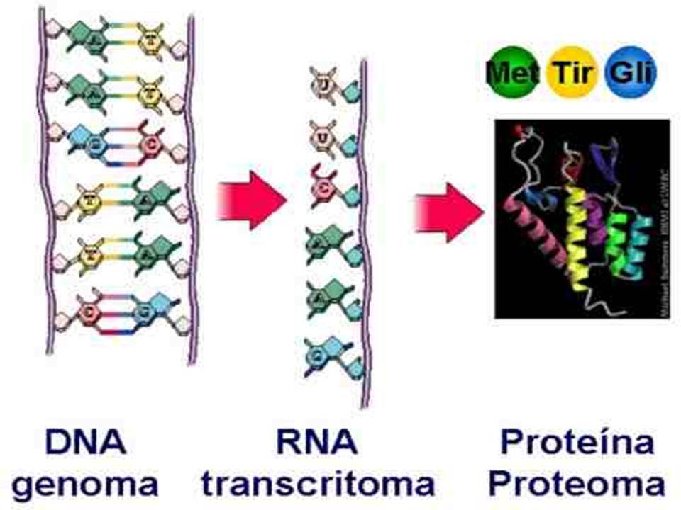 SERES TRANSGÊNICOS E OGM Recebem e manifestam genes de outros organismos;