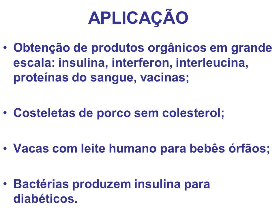 APLICAÇÃO Obtenção de produtos orgânicos em grande escala: insulina, interferon, interleucina, proteínas do sangue, vacinas; Costeletas de porco sem c