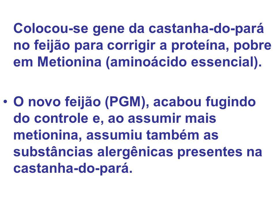 Colocou-se gene da castanha-do-pará no feijão para corrigir a proteína, pobre em Metionina (aminoácido essencial). O novo feijão (PGM), acabou fugindo