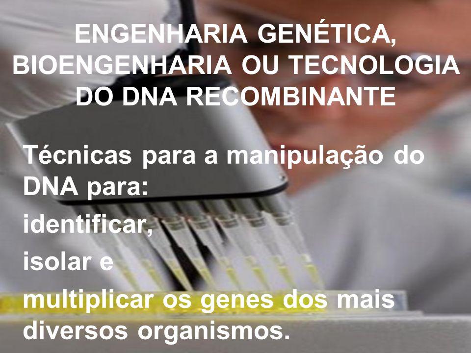 ENGENHARIA GENÉTICA, BIOENGENHARIA OU TECNOLOGIA DO DNA RECOMBINANTE Técnicas para a manipulação do DNA para: identificar, isolar e multiplicar os gen