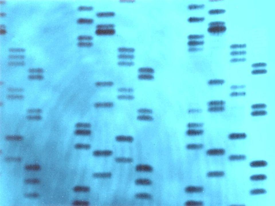 Utilização do teste de DNA Teste de paternidade; Identificação de autores de crimes; Prova de laços de parentesco; Identificação de cadáveres e fósseis.