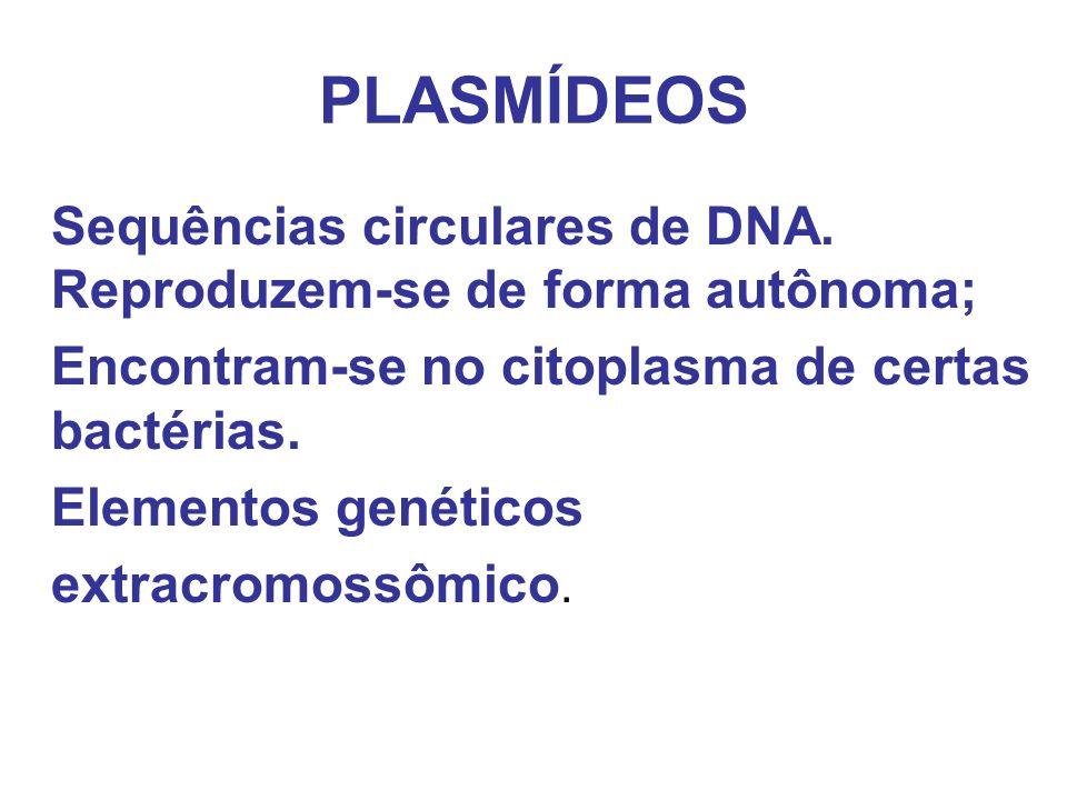 PLASMÍDEOS Sequências circulares de DNA. Reproduzem-se de forma autônoma; Encontram-se no citoplasma de certas bactérias. Elementos genéticos extracro