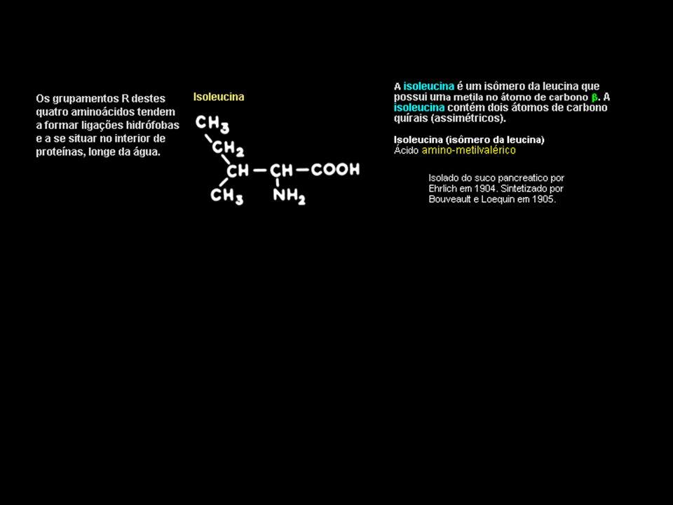Aminoácidos oleosos : Aminoácidos Hidrocarbonados Há quatro aminoácidos comuns com cadeias laterais hidrocarbonadas: Alanina, Valina, Leucina, Isoleucina Alanina Alanina contém três átomos de carbono.