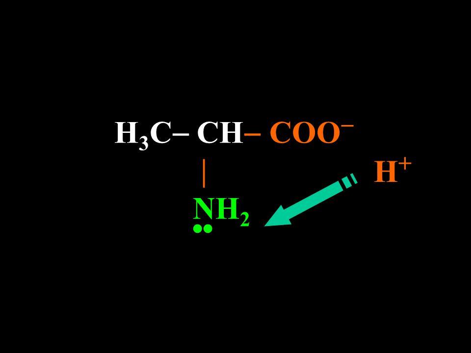 H 3 C CH COO – H + NH 2 Ocorre ionização do grupo ácido E esse H + vai pra onde?