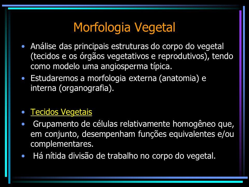 Morfologia Vegetal Análise das principais estruturas do corpo do vegetal (tecidos e os órgãos vegetativos e reprodutivos), tendo como modelo uma angio