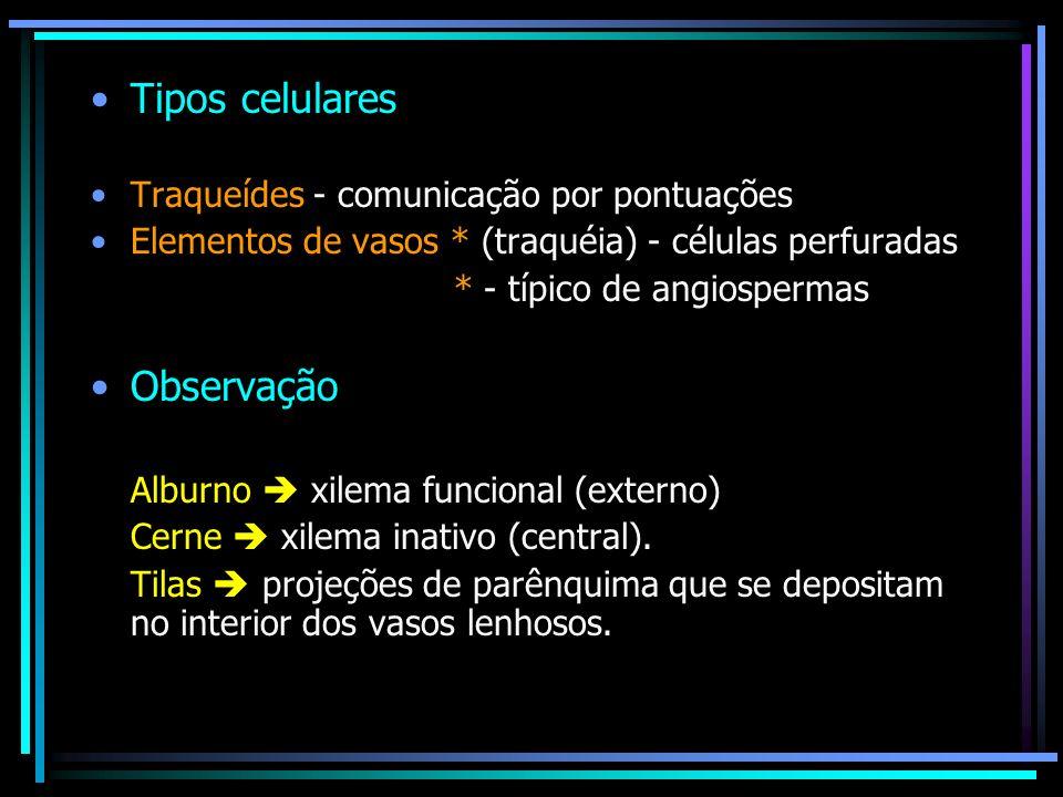 Tipos celulares Traqueídes - comunicação por pontuações Elementos de vasos * (traquéia) - células perfuradas * - típico de angiospermas Observação Alb