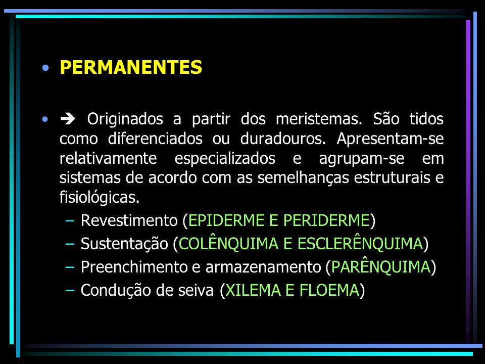 PERMANENTES Originados a partir dos meristemas. São tidos como diferenciados ou duradouros. Apresentam-se relativamente especializados e agrupam-se em