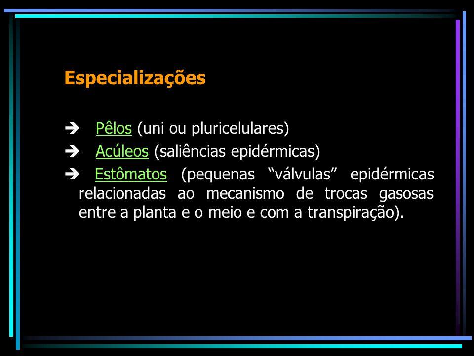 Especializações Pêlos (uni ou pluricelulares) Acúleos (saliências epidérmicas) Estômatos (pequenas válvulas epidérmicas relacionadas ao mecanismo de t