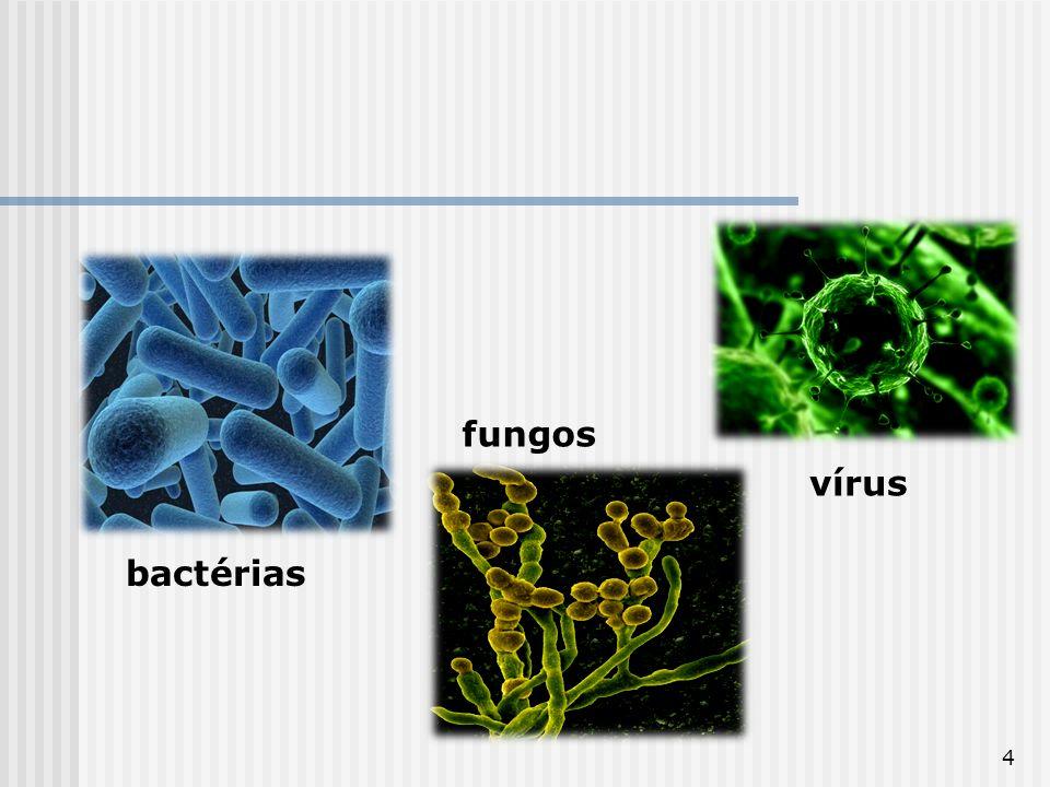 4 bactérias fungos vírus