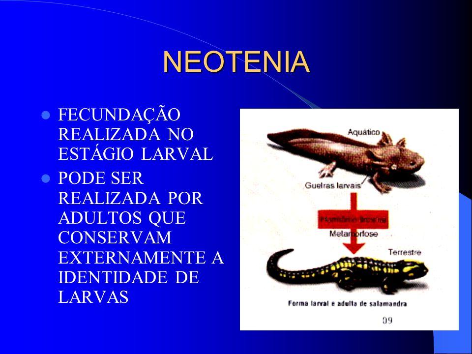 NEOTENIA FECUNDAÇÃO REALIZADA NO ESTÁGIO LARVAL PODE SER REALIZADA POR ADULTOS QUE CONSERVAM EXTERNAMENTE A IDENTIDADE DE LARVAS