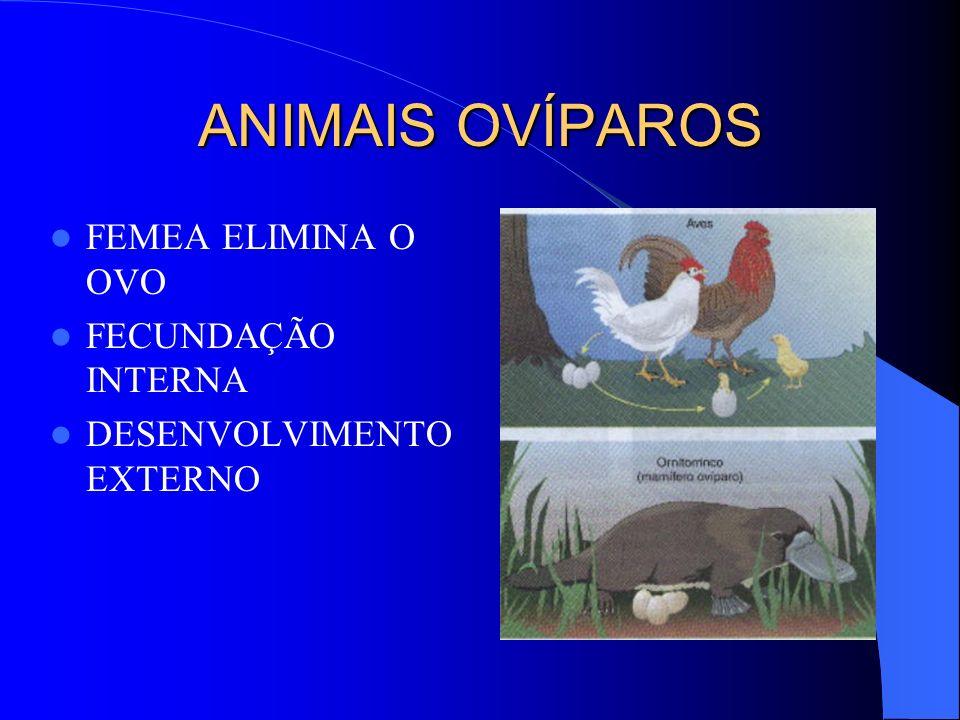 ANIMAIS OVÍPAROS FEMEA ELIMINA O OVO FECUNDAÇÃO INTERNA DESENVOLVIMENTO EXTERNO