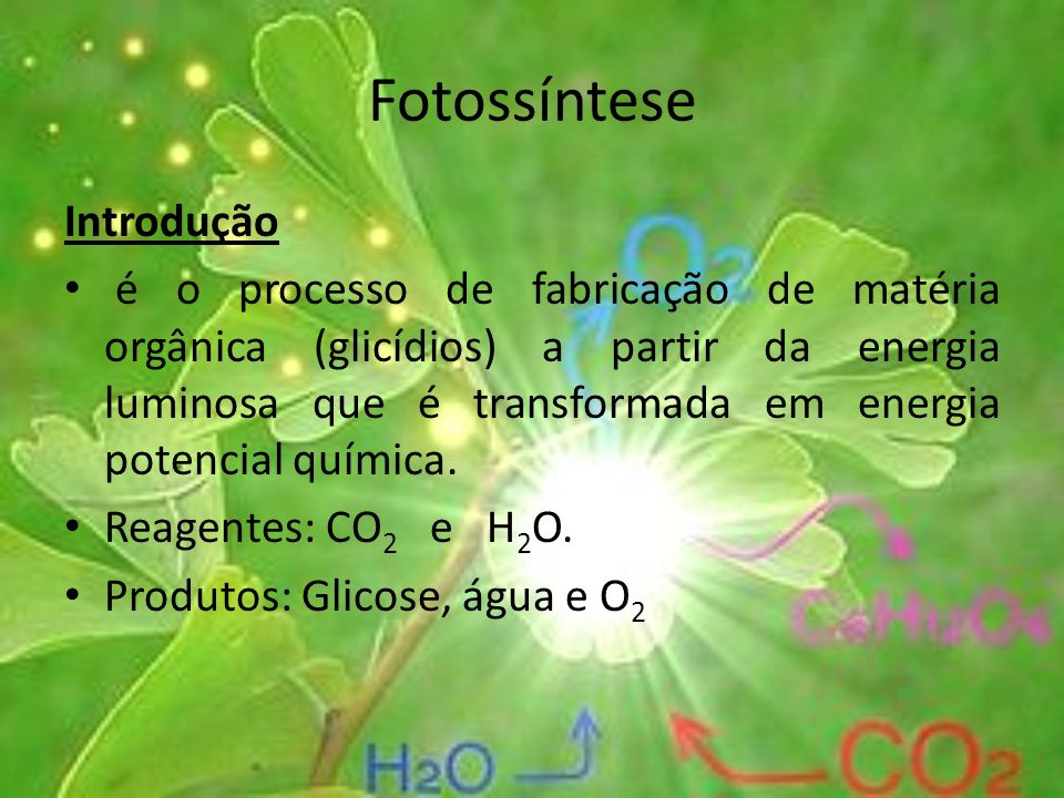 Fotossíntese Introdução é o processo de fabricação de matéria orgânica (glicídios) a partir da energia luminosa que é transformada em energia potencia